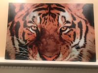 Tiger canvass Sterling, 20165