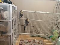 Bird cage with 2cackatiel 格伦伯尼, 21061