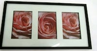 Pink rose signed photography in frame  London