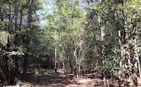 Gorgeous 75 acres of Land For Sale in MS. Build a home here.