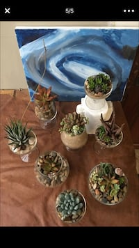 green,teal and maroon succulent plants