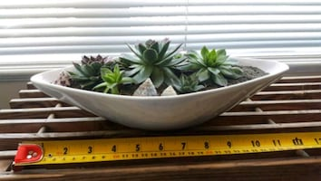 Succulent in ceramic planter bowl