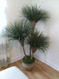 """Faux plant 67"""" H North Fort Myers, 33903"""