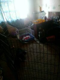 Dog cage big enough for a large dog or playpen  68 km