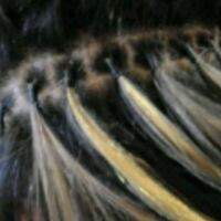 Professional traveling hair extensions ser Silver Spring, 20905