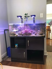 Salt water tank 30 gallon with stand. High end Buffalo, 14225