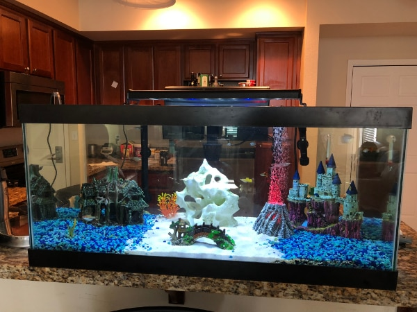 complete 50 gallon aquarium setup fish tank usagé à vendre à