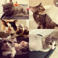Cat grooming Mississauga