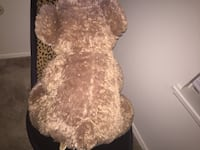 42 Inch brown bear with pink heart South Bend, 46616