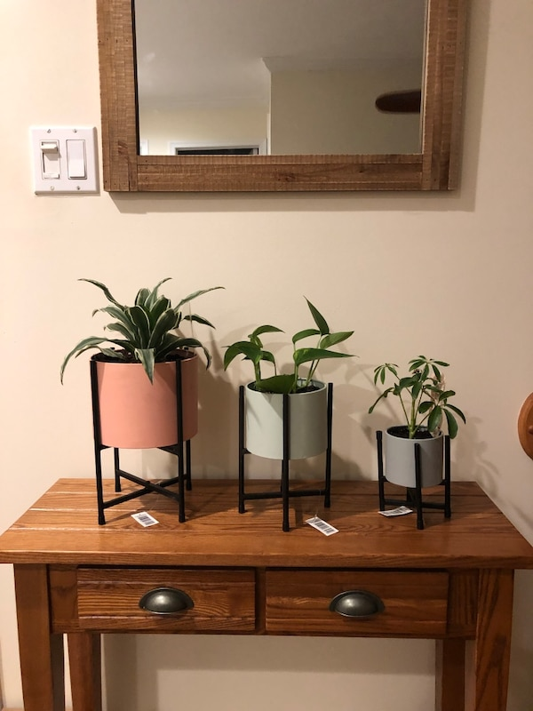 Plants with Set of 3 colorful Planters and Stands