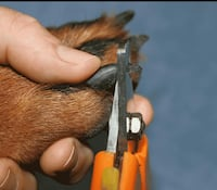 Pet Nail Trims