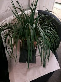 Artificial plant with Mirror pot Florissant, 63031