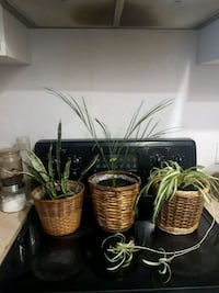 3 assorted plants with the pots  Laval, H7G 2W7