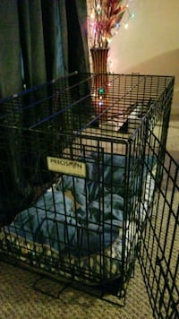 black metal folding dog crate Brampton, L6S 4J4