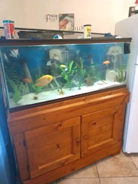 55 gallon fish tank