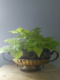 plant in antique brass  Bowl  Long Beach, 39560