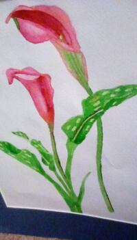 """ROSE  COLORED CALLILILLY"" watercolor Frederick"