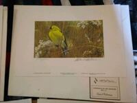 Gold finch in the media by Robert bateman