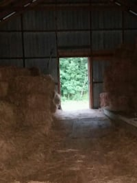 Hay for sale price negotiable Dover, 17315