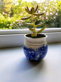 Succulent In Small Hand-Painted Vase Mississauga