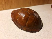 Turtle shell  Commerce City, 80022