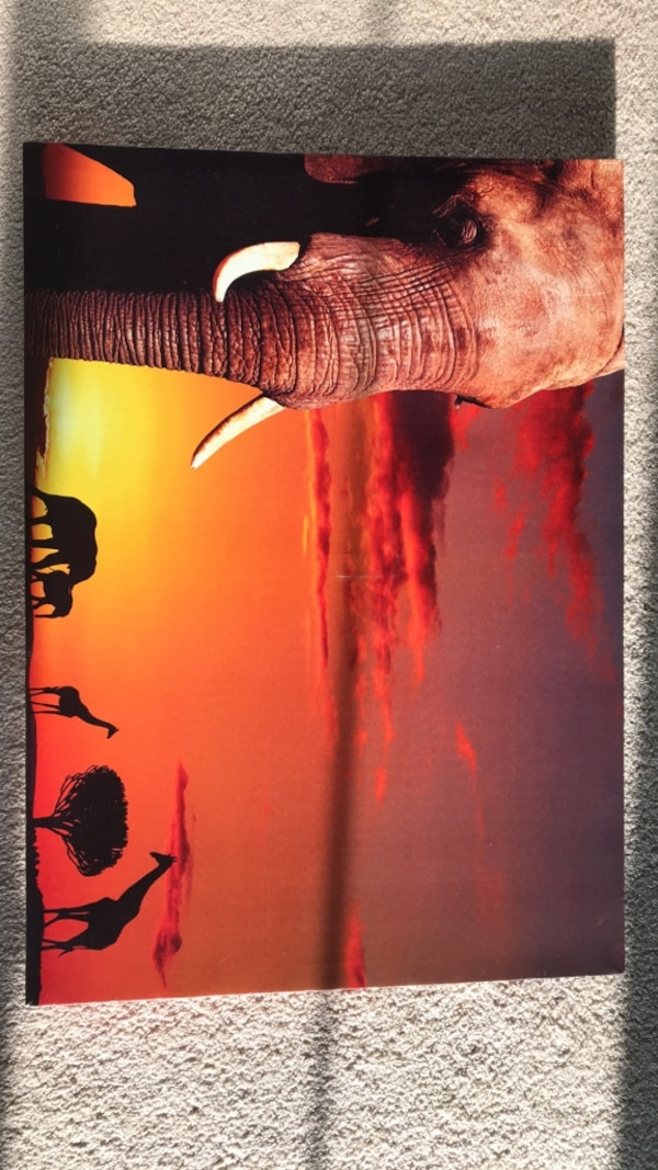 Elephant CANVAS Picture