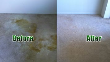 one room free carpet cleaning