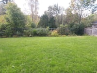 I will do lawn mowing Guelph. Guelph