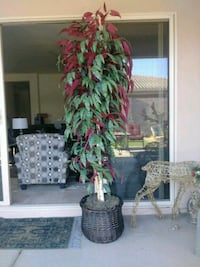 Artificial tree 8 foot tall Chandler, 85286