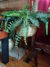 Fern in plant stand