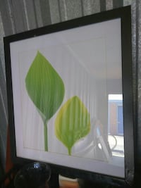 Choice picture $10 have multiple Green Leaf pics Wichita, 67204