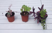 Small succulent plants $4 each or 3 for $10