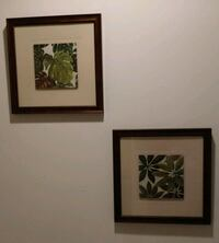 * Set of two plant pictures w/ frame * like new * Haymarket, 20169