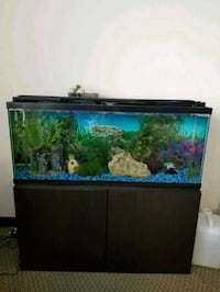 black framed clear glass fish tank Austin, 78758