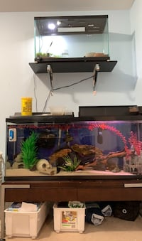 55 & 29 Gallon Fish Tanks Richmond Hill, L4C 9V1