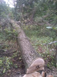 Tree removal and trimming Princeton