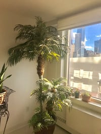 Artifical  Paradise  Palm Tree  7' Nearly  Natural 219 mi