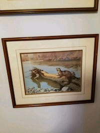 Framed Nature Paintings