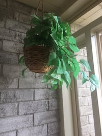 Decorative artificial Money plant roof hanging with basket  Brampton, L6S 3R7