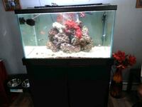 Salt water fish tank everything included Poughkeepsie, 12601
