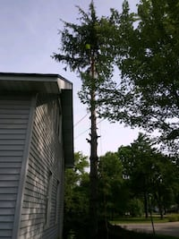 tree removal Grand Blanc Township