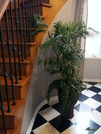 Artificial tree with vase great !  Toronto, M1M 2Z2