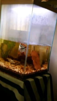 Hexagonal 33 gallon fish tank with fish heater and filter.