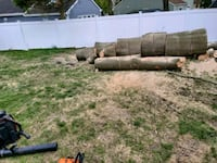 Trees service and more stump removal