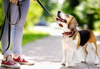Dog walking: one-on-one. Minimum 30mins for $5 Mississauga