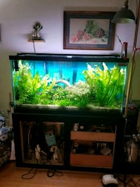 AQUARIUM- well maintained Worth $2000  Surrey, V3T 2Y8