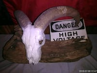 Ram skull mounted on driftwood with high voltage s New Caney, 77357