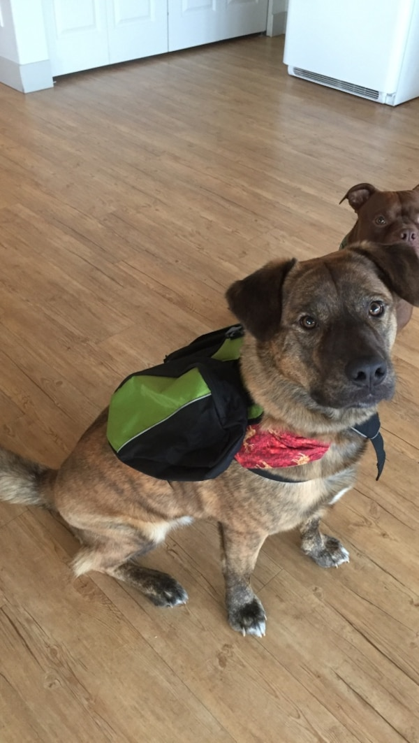 Dog backpack with zippers