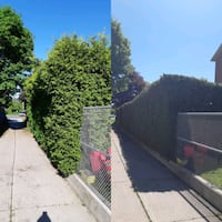 hedge trimming Toronto