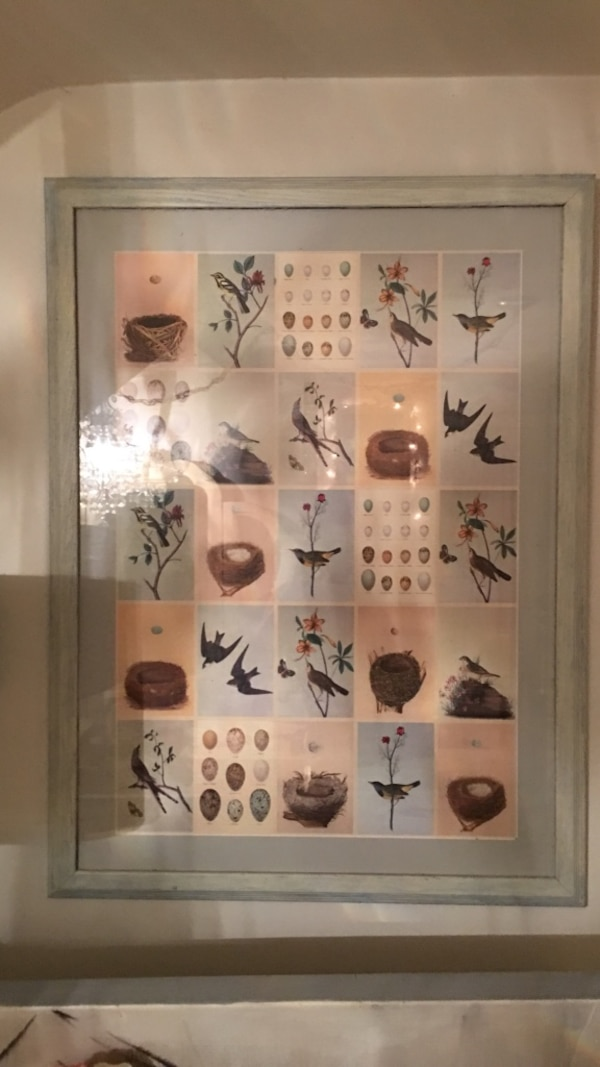 Assorted bird photo with gray wooden frame